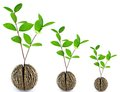 Grow seed Royalty Free Stock Photo