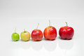 Growing acerola in white background isolated