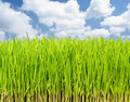 Growing fresh grass Stock Photos
