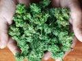 Growing fresh organically pure cannabis buds. hold in hands easy recreational drug marijuana