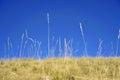 Growing grass under blue sky taken in qilian mountian Royalty Free Stock Image