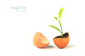 Growing green plant in egg shell isolated Royalty Free Stock Photo