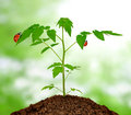 Growing green plant with ladybug Stock Photo