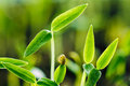 Growing Green Sprout. Spring Concept Of New Life Royalty Free Stock Photo