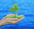 Growing green tree in hands over blue sea background, Environmen Royalty Free Stock Photo