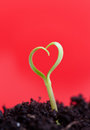 Growing love concept Stock Images