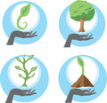 Growing plants graphic of in different stages Royalty Free Stock Image