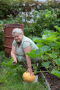 Growing pumpkins woman pensioner on personal garden grow pumpkin Royalty Free Stock Photography