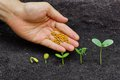 Growing a tree hand giving chemical fertilizer to plants in sequence of seed germination on soil evolution concept Stock Photo