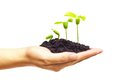 Growing a tree hand holding and caring young green plant planting plant seedling Stock Photography