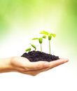 Growing a tree hand holding and caring young green plant planting plant seedling Stock Photos