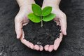 Growing a tree two hands holding and caring young green plant planting love nature save the world Stock Images