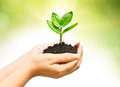 Growing a tree two hands holding and caring young green plant planting love nature save the world Royalty Free Stock Photos
