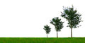 Growing Trees Royalty Free Stock Photo