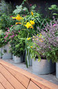 Growing vegetables such as tub plants Royalty Free Stock Photo