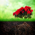 Growth concept background azalia flower and grass in the soil on spring Stock Photography