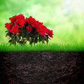 Growth concept with flower azalia and grass in the soil on spring background Stock Photos