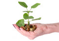 Growth concept with human hand holding a green small plant plant planted in coins isolated on white Royalty Free Stock Image