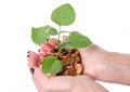 Growth concept with human hands holding a green small plant plan planted in coins isolated on white Stock Photography