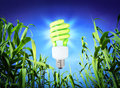 Growth ecology compact fluorescent lamp green lighting nature background Royalty Free Stock Photos