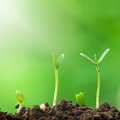 Growth of green plants. Royalty Free Stock Photo