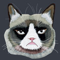 Grumpy cat head Royalty Free Stock Photo