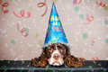 Grumpy new year dog looking wearing a hat with confetti Stock Photos