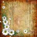 Grunge abstract background with chamomile Stock Image