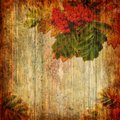 Grunge abstract background with rowan Stock Images