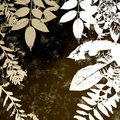 Grunge Autumn Leaves Silhouette Stock Photos