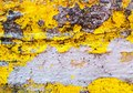 Yellow and grey texture of a grunge background. Great texture. Useful as backdrop.
