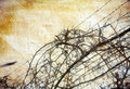 Grunge background with grape-vine over barbed wire Royalty Free Stock Photography