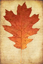 Grunge background with oak autumn leave Stock Photography