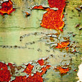 Grunge background. Old paint texture. Royalty Free Stock Photo
