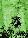 Grunge foliage Royalty Free Stock Photo