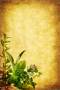 Grunge Herb Background Royalty Free Stock Photo