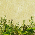 Grunge Herbs Stock Photos