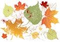 Grunge leaves background Royalty Free Stock Image