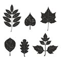Grunge leaves silhouete set Stock Photography