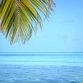 Grunge palm background Royalty Free Stock Photo