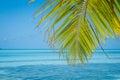 Grunge palm Royalty Free Stock Photo