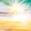 Grunge palm background. Royalty Free Stock Photo