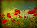 Grunge poppies background Royalty Free Stock Photo