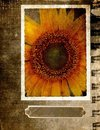 Grunge postcard with sunflower 2 Royalty Free Stock Photo