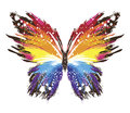 Grunge rainbow butterfly in style Stock Photos