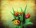 Grunge red and yellow tulips Stock Image