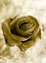 Grunge rose 0801 Royalty Free Stock Photo