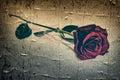 Grunge Rose Royalty Free Stock Photo