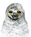 Sketch of a Sloth