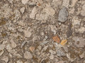 Grunge texture with cement and stones wall surface of old building Royalty Free Stock Photos